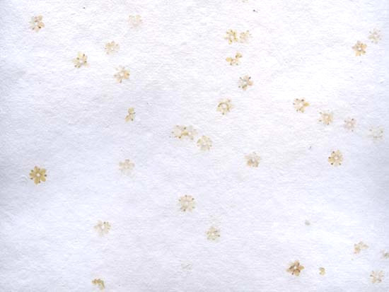 Flores de Sauco Blanco